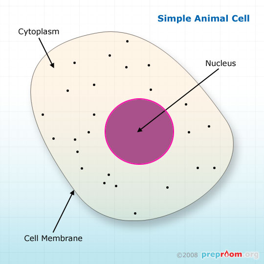 Animal cells biology printer friendly page preproom fig 1 simple animal cell ccuart Image collections