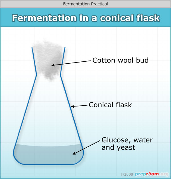 Fermentation Science Practical Expiriment Used In School