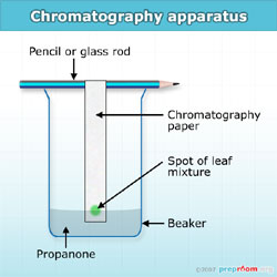chromatography paper where to buy Custom dna oligos, rnai & assays centrifuges & microcentrifuges centrifuges & microcentrifuges.